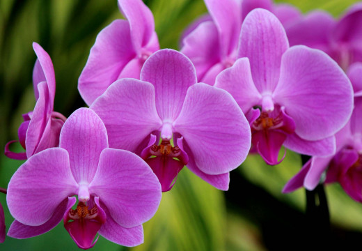 Фото цветы орхидеи в хорошем качестве